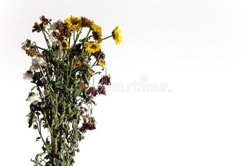 Dö växter på en vit bakgrund arkivfoto