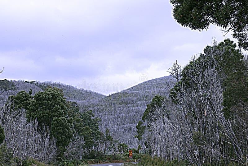 Död av en Forrest, Tasmanien arkivbilder