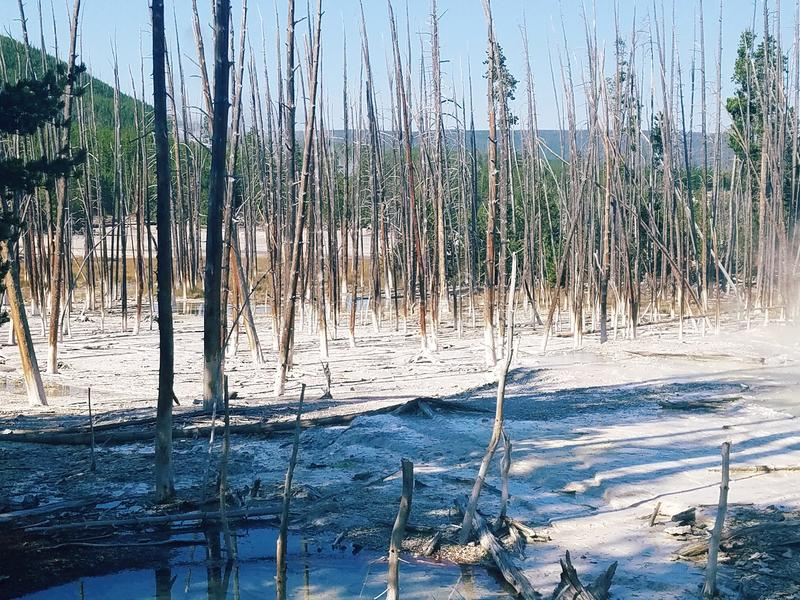 Död i skogen arkivfoton