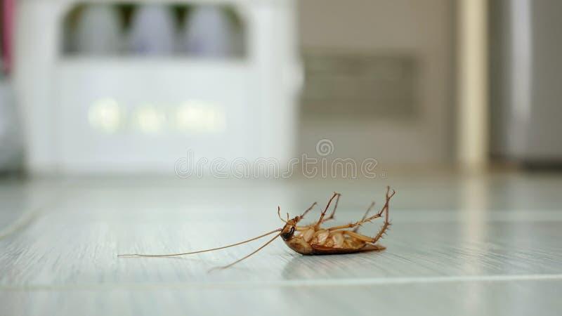 Död kackerlacka på golvet arkivbilder