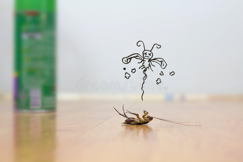 Död kackerlacka på golvet, plågakontrollbegrepp arkivfoton