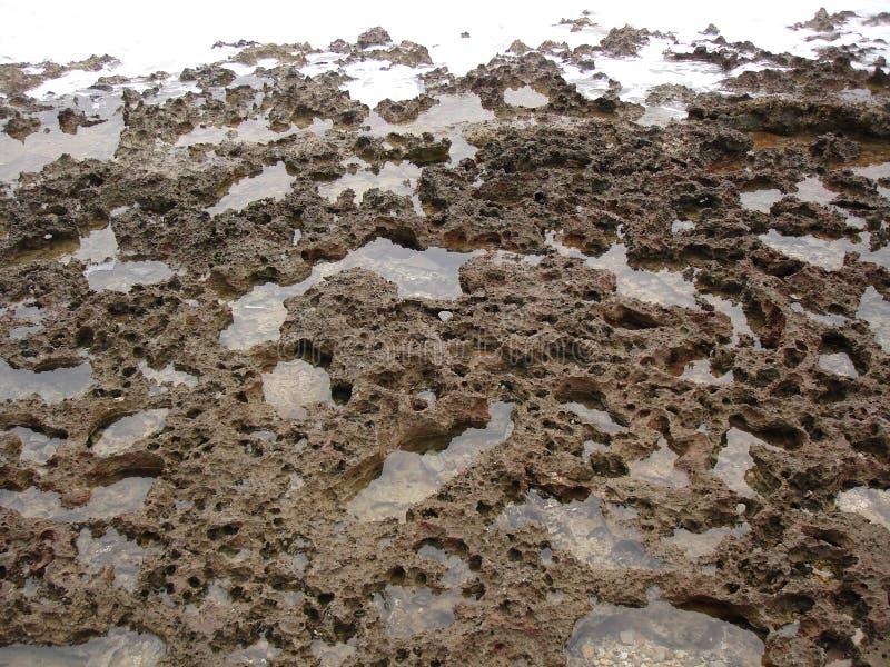död korall royaltyfria foton