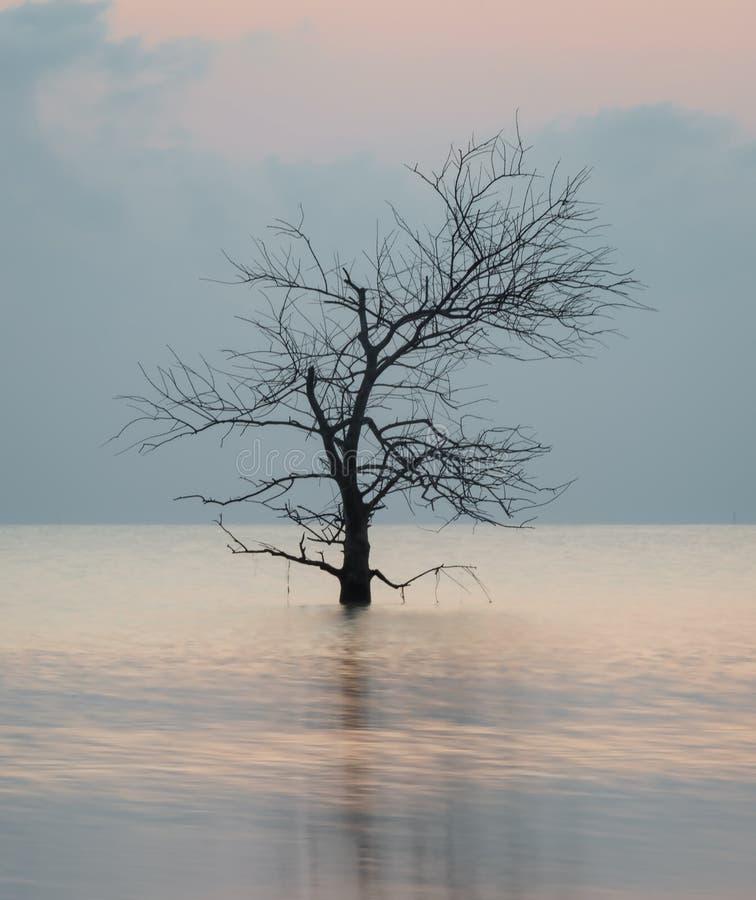 död laketree royaltyfri fotografi