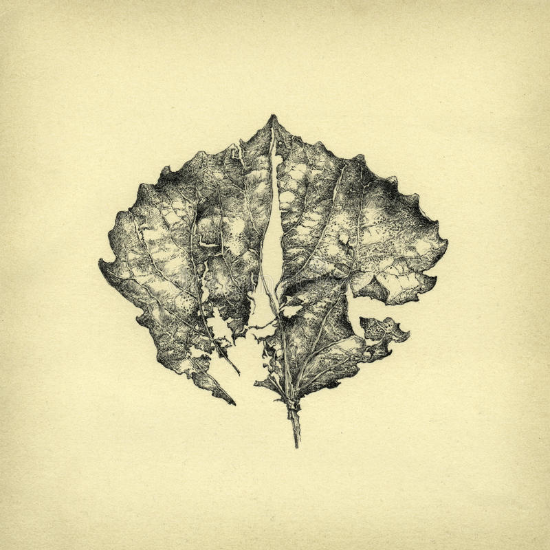 död leaf royaltyfri illustrationer