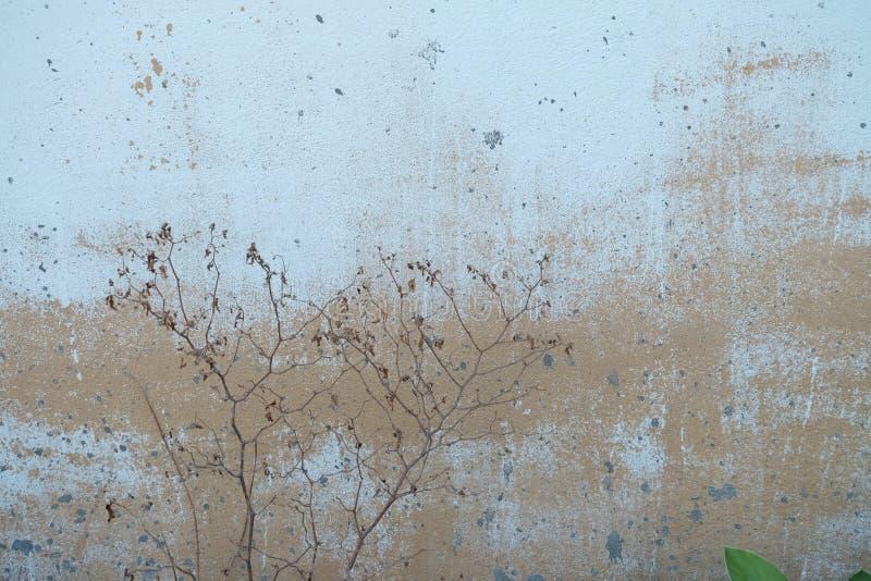 Död liten växt på den gamla skrapade väggen royaltyfri bild