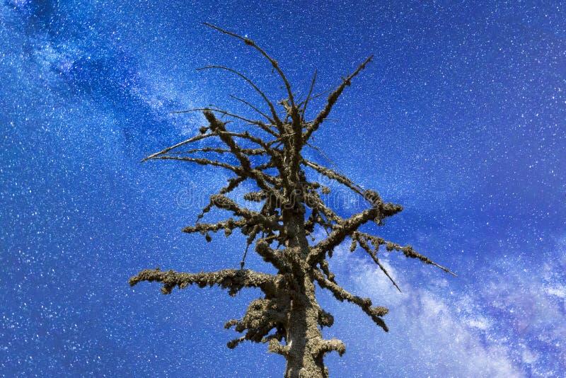 Död mossig trädVintergatan fotografering för bildbyråer