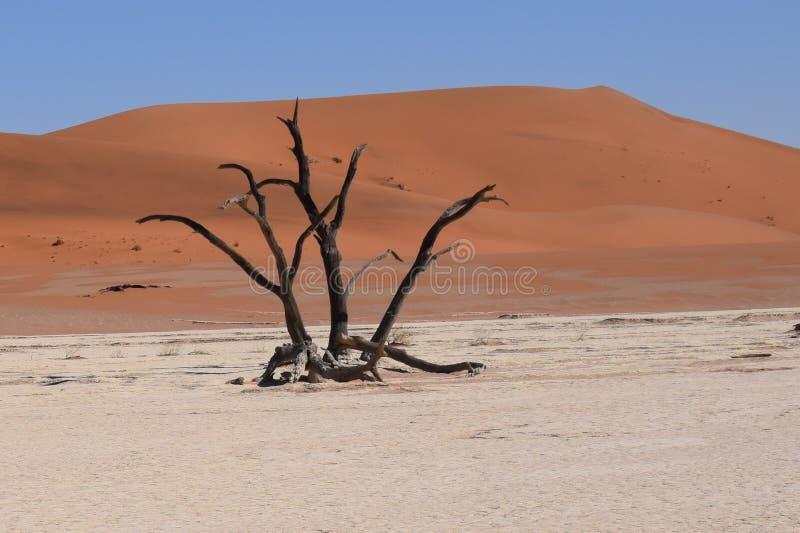död namibia vlei royaltyfria foton