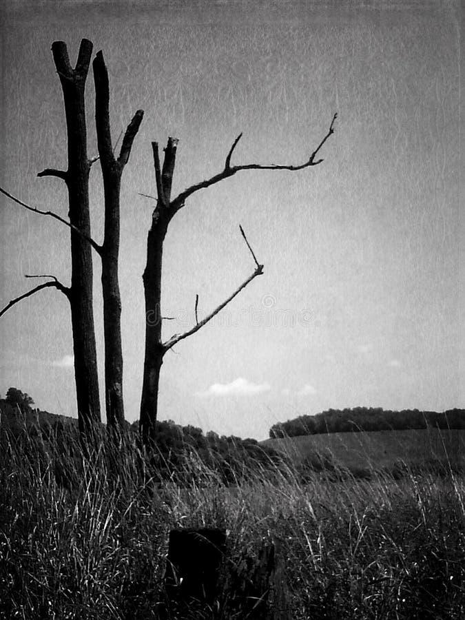 död skönhet arkivfoton