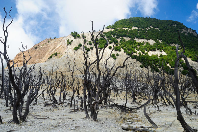 död skog royaltyfri bild