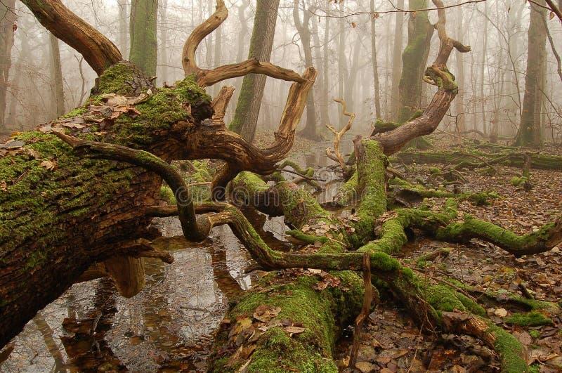 död swamp arkivfoto