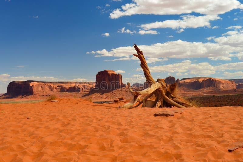Död träd- och monumentdal arkivfoto