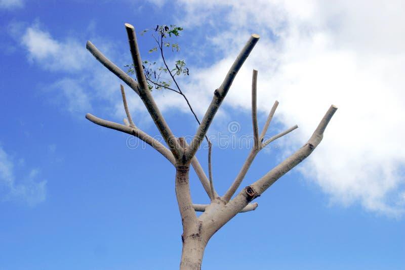 Död Tree Royaltyfria Foton