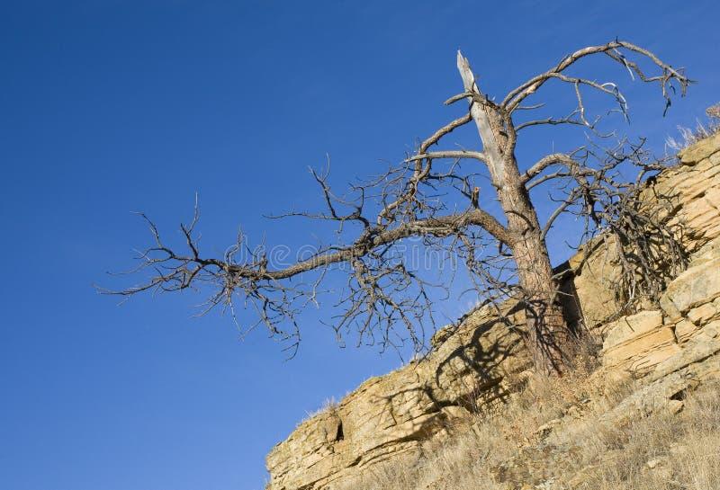 Död tree royaltyfri fotografi