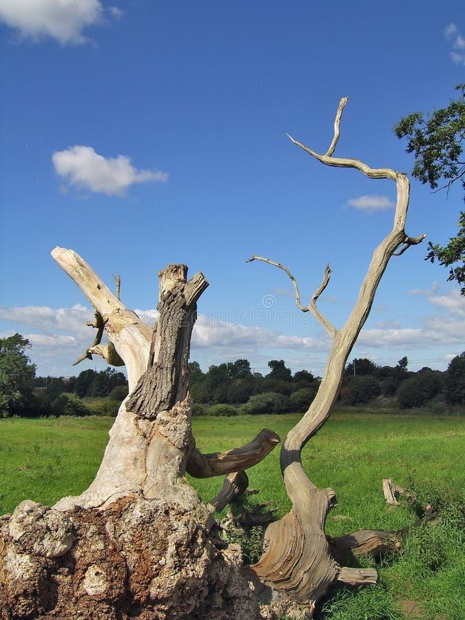 Download Död tree arkivfoto. Bild av stam, filialen, fält, fatta - 284748
