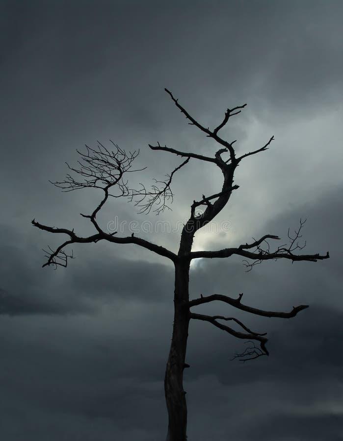 död tree royaltyfri foto