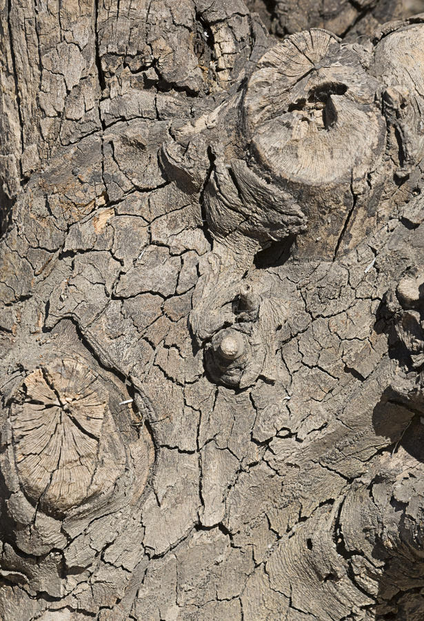 död tree arkivfoto
