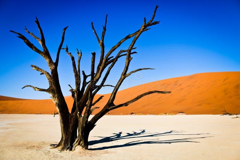 Död tree i öken arkivfoto