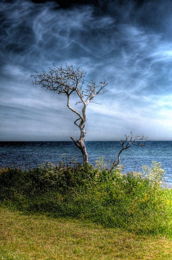 Död tree på strand royaltyfri bild