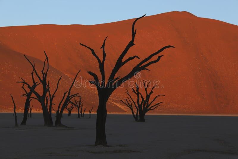 Död Valey Namib öken Namibia arkivbilder