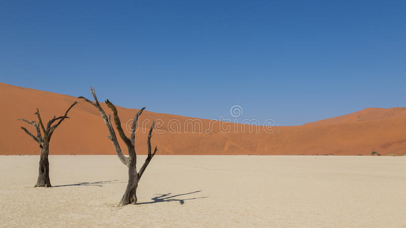 Döda akaciaträd i DeadVlei royaltyfri bild