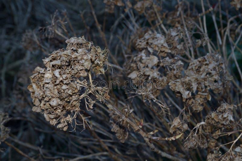 Döda blommor arkivfoton
