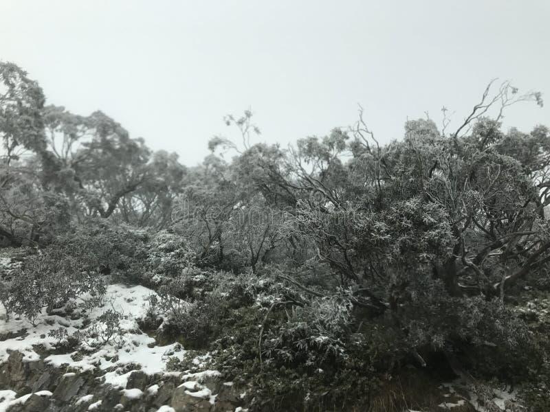 Döda buskar med snöig filialer royaltyfri fotografi