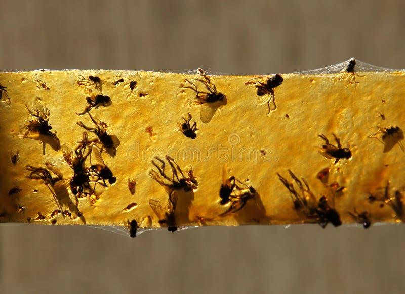 Döda flugor på ett klibbigt band royaltyfria foton