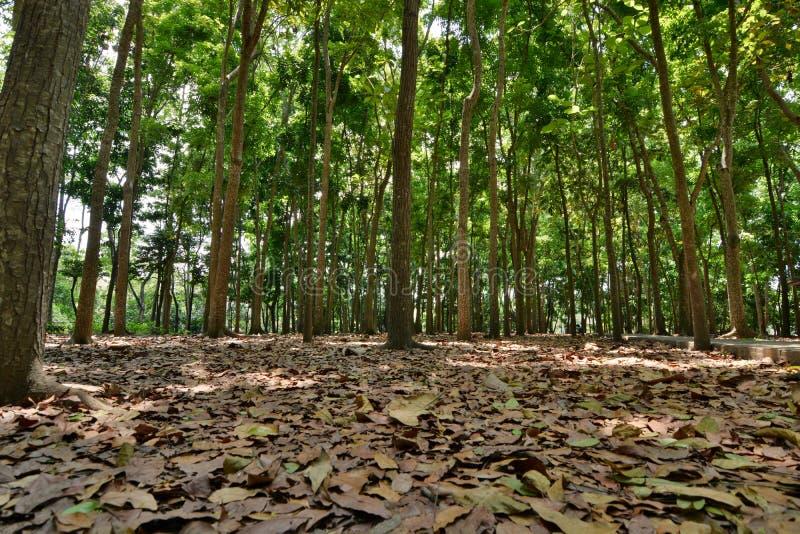 Döda sidor i den apaskogPadangtegal byn Ubud _ Indonesien royaltyfria bilder