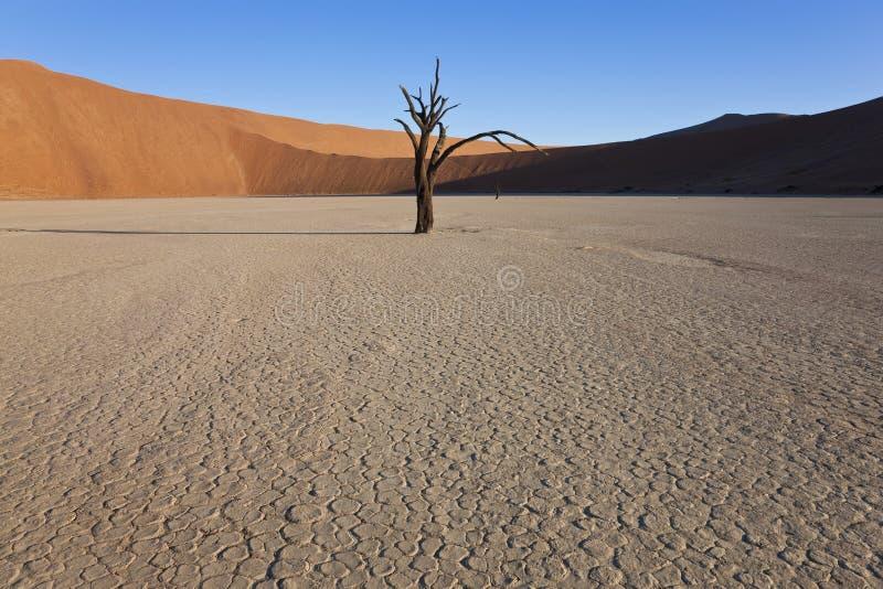 Döda träd, döda Vlei, Namibia royaltyfri fotografi