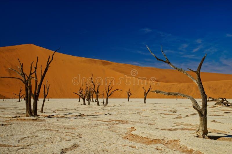 Döda träd, Deadvlei, Namibia royaltyfri fotografi