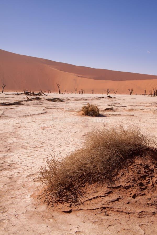 Döda träd i Deadvlei, Namib öken, Namibia, Afrika arkivbild