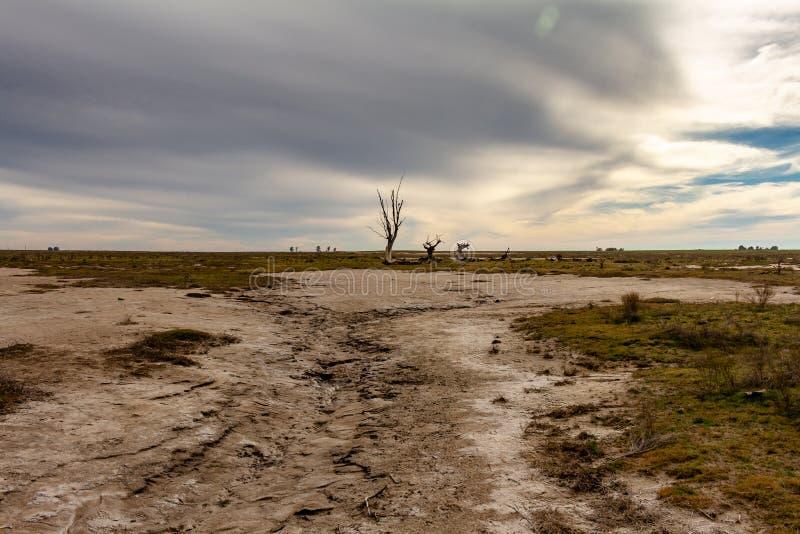 Döda träd i den övergav staden av Epecuen Flod som förstörde staden Ensamt stads- landskap övergiven för israel jordan för spöke  royaltyfria bilder