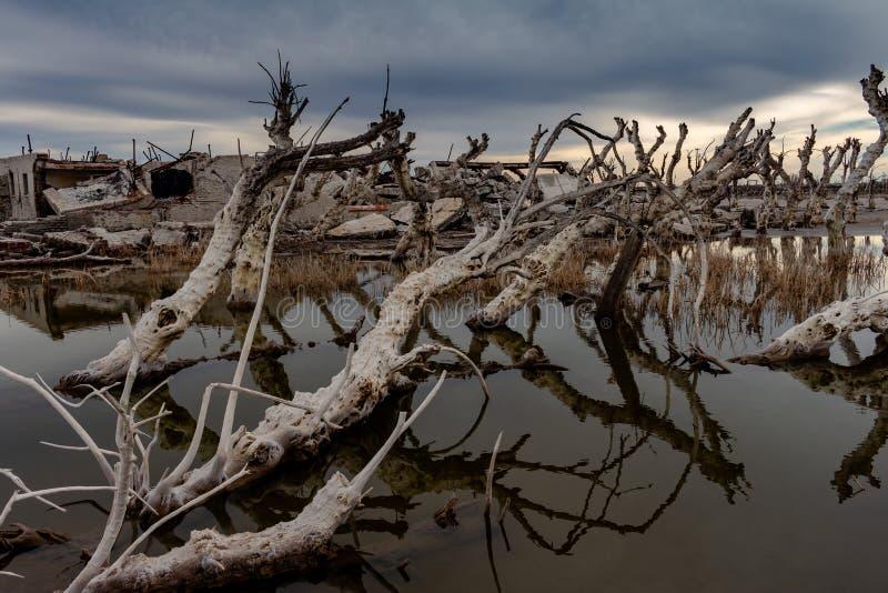 Döda träd i den övergav staden av Epecuen Floden, som förstörde staden och lämnade den in, fördärvar Ensamt stads- landskap royaltyfria foton