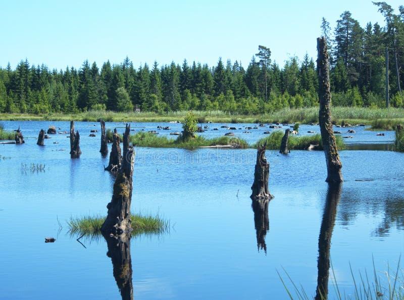 Döda träd i en sjö arkivbilder