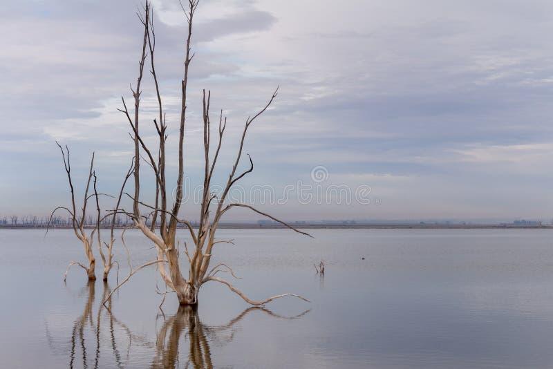 Döda träd i staden av Epecuen Ensamt landskap utan folk royaltyfria bilder