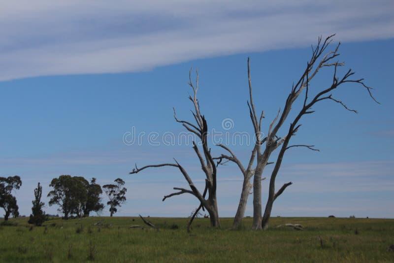Döda träd och deras bruk fotografering för bildbyråer