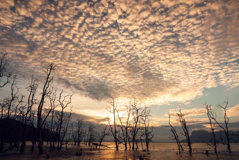Döda träd och smutsar ner stranden på solnedgången fotografering för bildbyråer