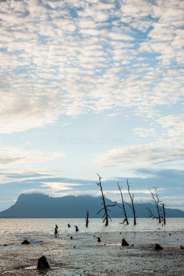Döda träd och smutsar ner stranden på solnedgången arkivfoto