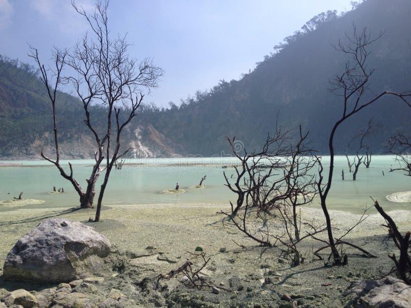 Döda träd/skog inom vulkan, java, indonesia arkivbild