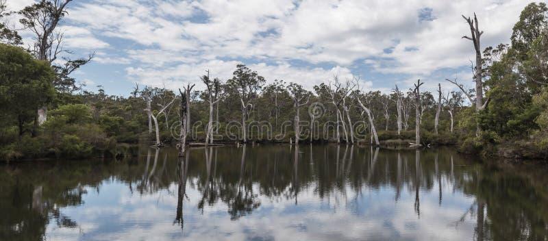 Döda träd som ger härliga reflexioner på vattnet arkivbilder
