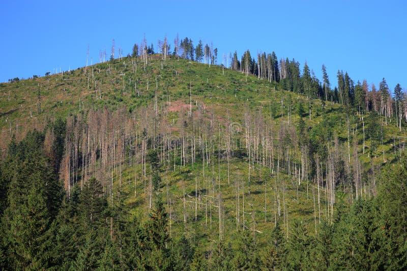 Döda trees royaltyfri foto
