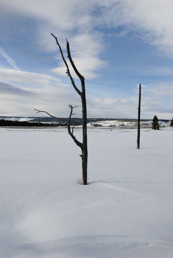 Döda Trees, springbrunn målar krukar område, vinter arkivbild