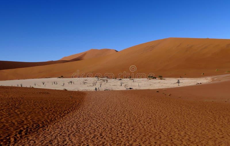 Döda Vlei i den sydliga delen av den Namib öknen, i den Namib-Nacluft nationalparken i Namibia royaltyfri bild