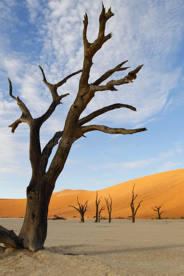 Döda Vlei, Sossusvlei, Namibia royaltyfri fotografi