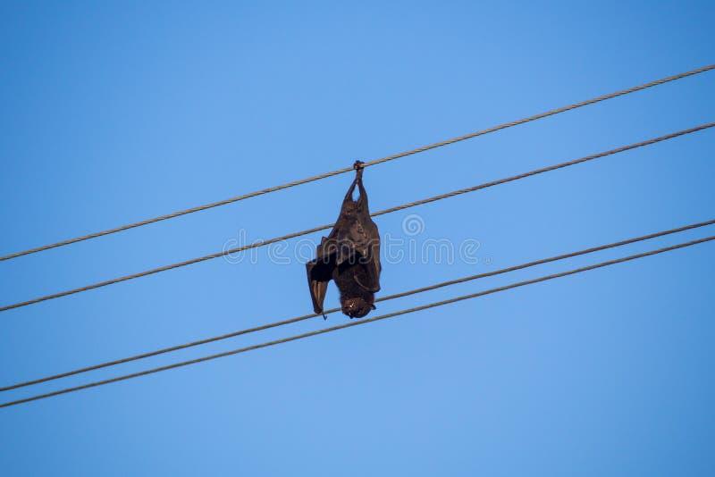 Dödat med elektrisitet fruktslagträ som hänger från elströmkabel royaltyfri bild