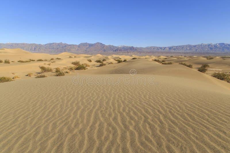 döddyner sand dalen arkivfoto