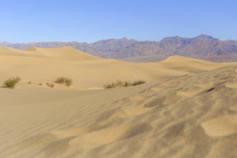 döddyner sand dalen royaltyfri foto