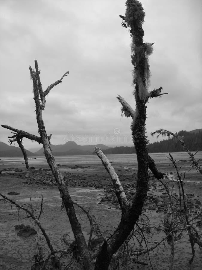 Download Dödtid arkivfoto. Bild av åldrades, död, tree, berg, mörkt - 986800