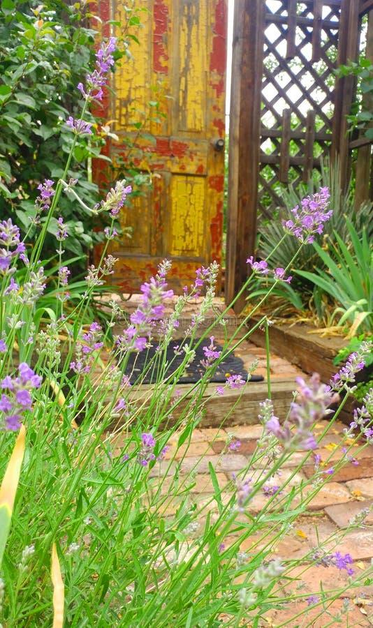 Dörr för hemlig trädgård royaltyfri foto