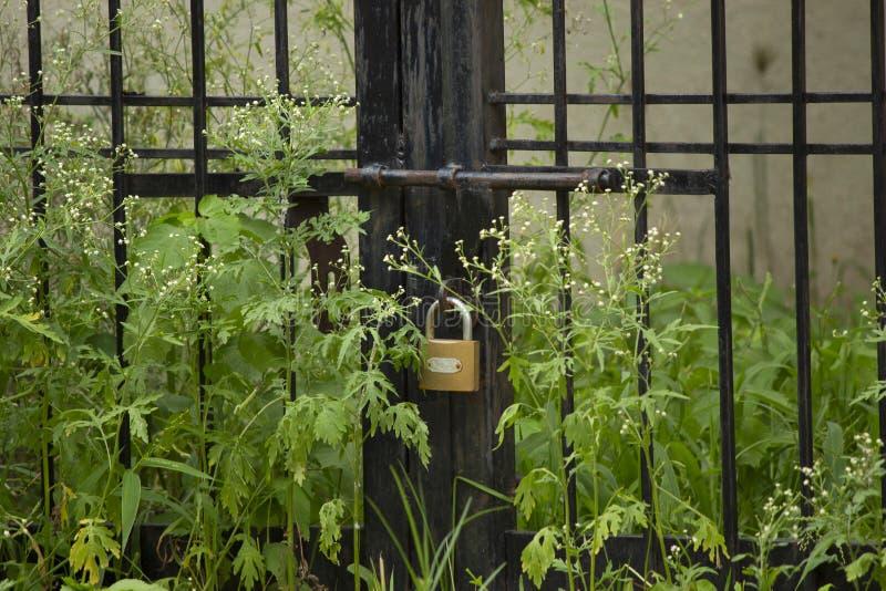 Dörr med låset och ogräs som omkring växer, övergett ställe, Maharashtra, Indien royaltyfri foto